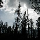 Sky from Forest by eclectickimmer
