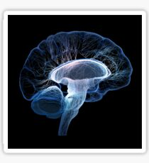 Human brain complexity - Conceptual Sticker