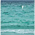 Volunteer Point Seascape by KateMcCSeattle