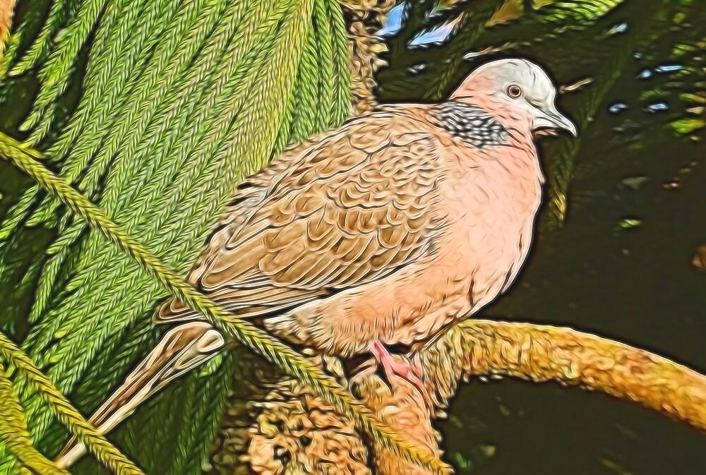 Dove by photosbypamela