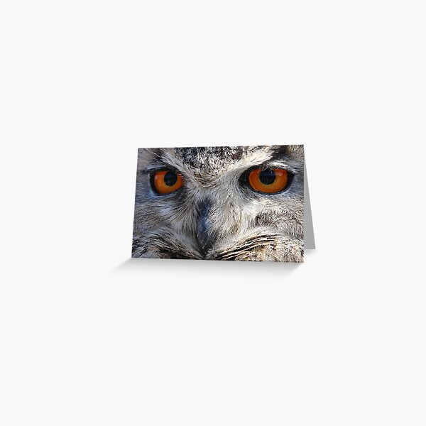 Eagle Owl Stare Greeting Card