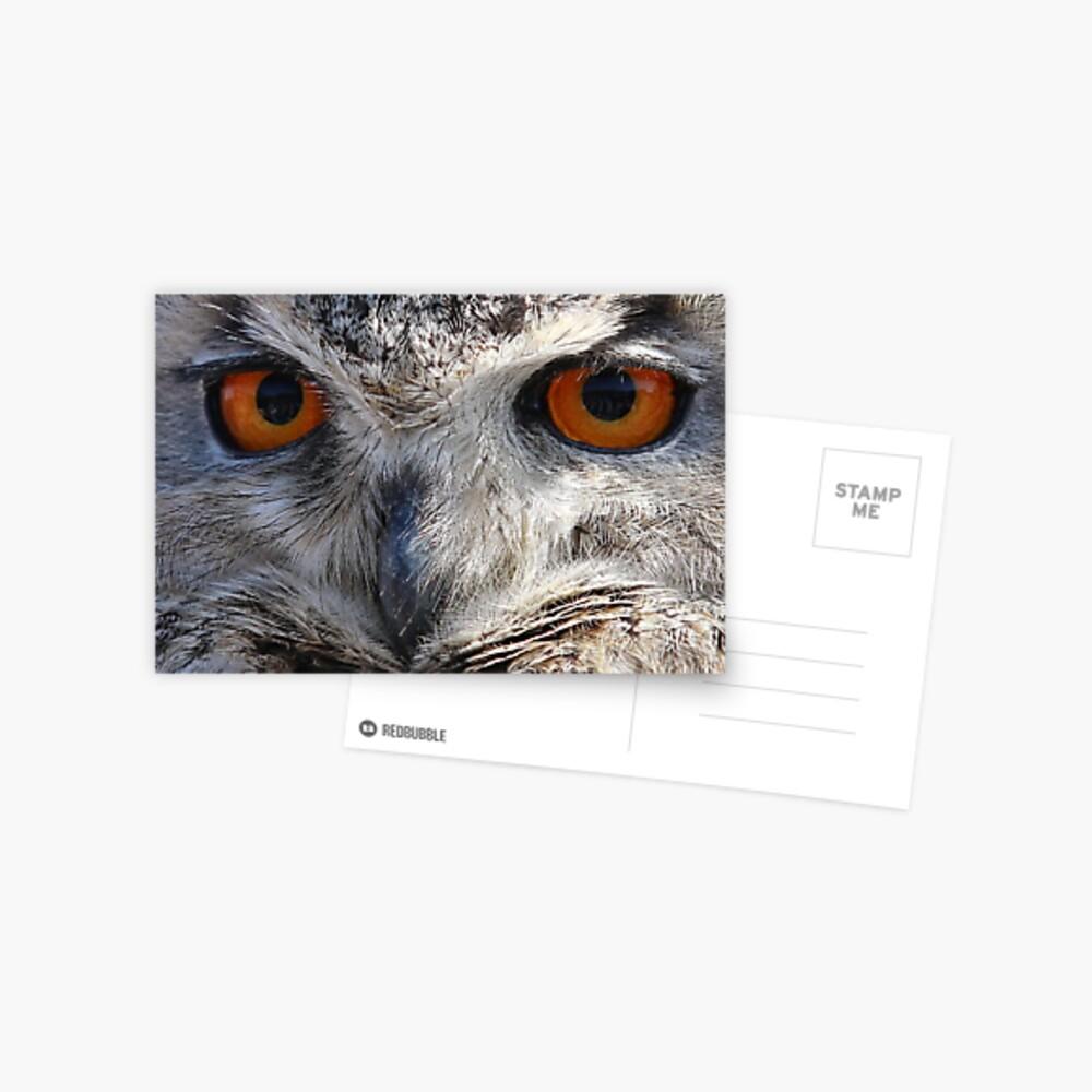 Eagle Owl Stare Postcard