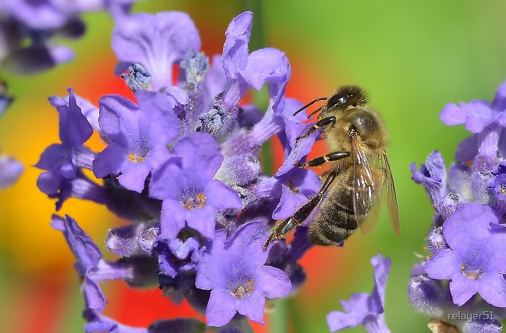 Bee by relayer51