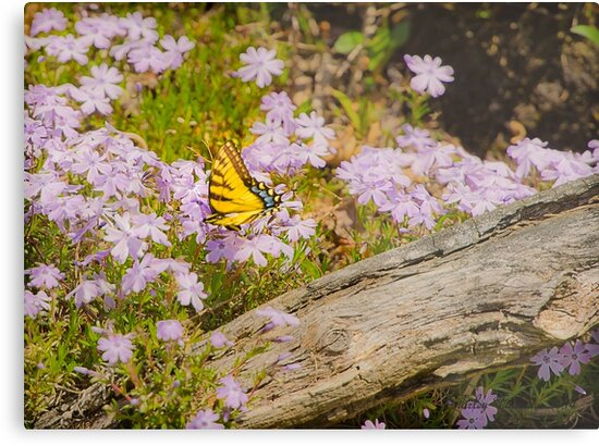 A Butterfly's Life by Shirley Tinkham
