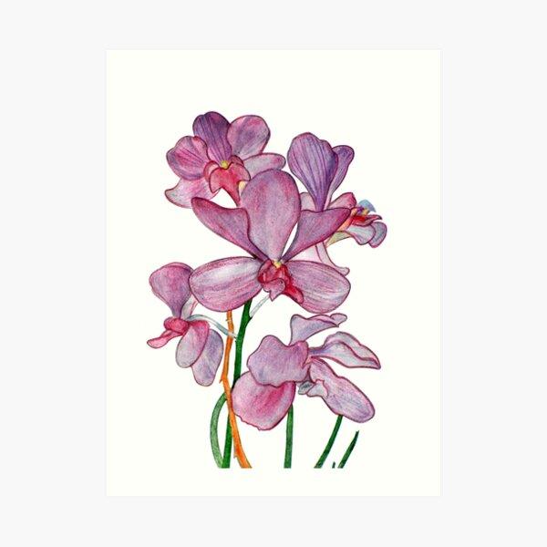 Tropical Pink Ochid Flowers Art Print