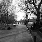 Stephenstown Pond by Niamh Harmon