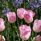Tulips ~ Dancing in the Sunlight by SummerJade