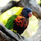 Bird Cage - Cincinnati Zoo by Jeanne Sheridan