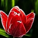 A fractal Tulip by Dirk Pagel