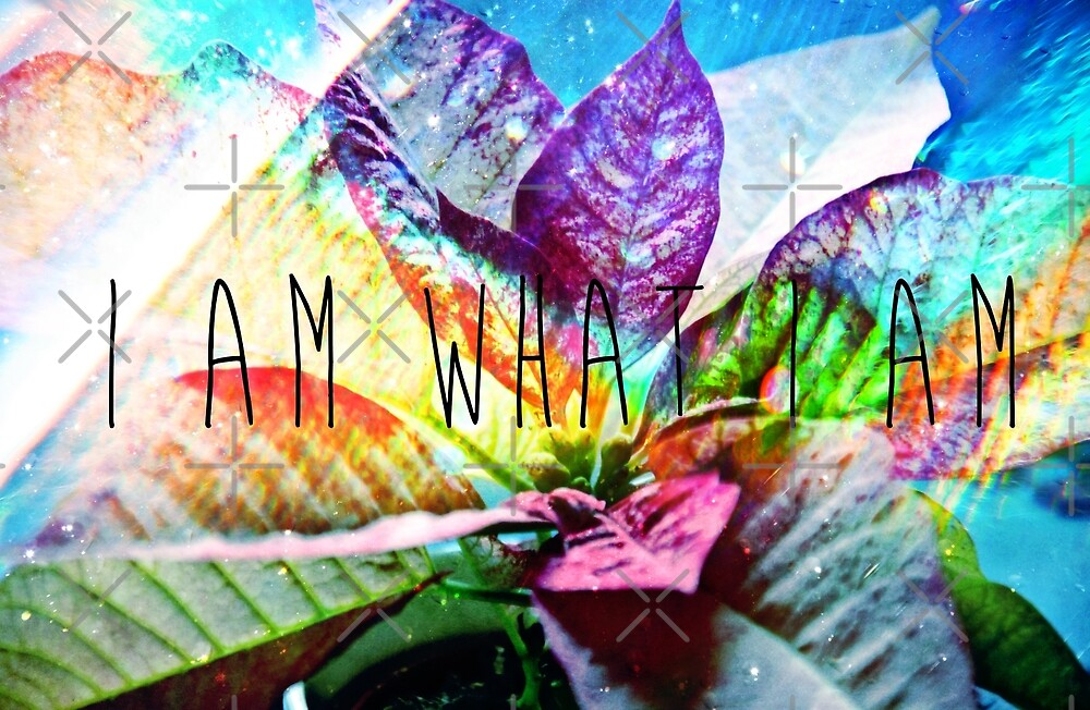 I Am What I Am by Denise Abé