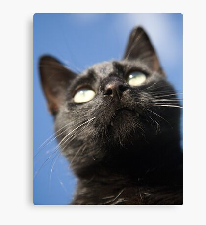 surveying its territory Canvas Print