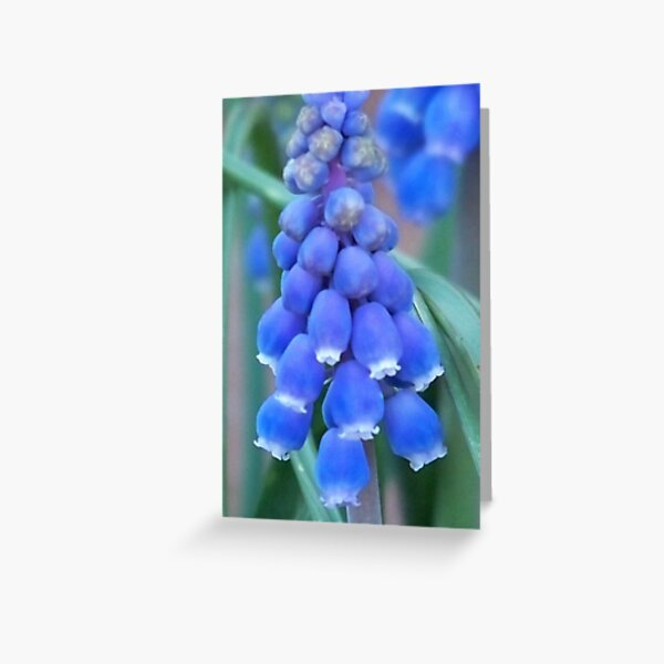 Bells of Blue Greeting Card
