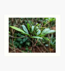 Rhododendron plant photo Art Print
