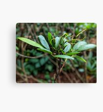 Rhododendron plant photo Canvas Print