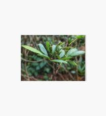 Rhododendron plant photo Art Board