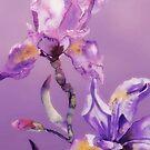 blue purple iris by aquaarte