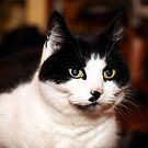 Black and white cat by Leon Woods