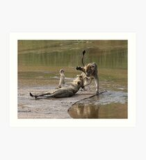 Young Lions Playing In Water Art Print