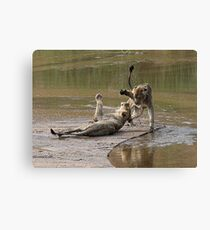 Young Lions Playing In Water Canvas Print