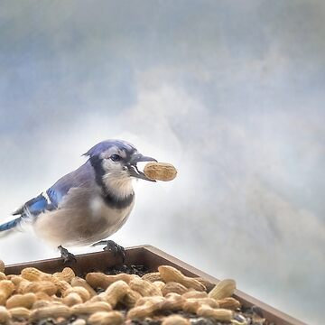 Blue Jay and Peanuts by kdxweaver