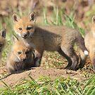 5 of 9 Red Fox Kits by DigitallyStill