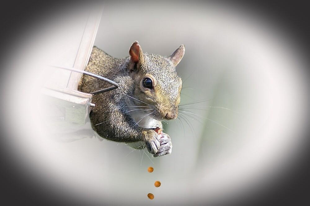 Squirrel by Jill Bernier