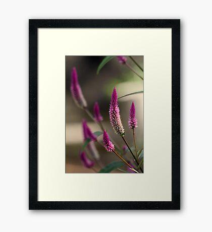"""Purple Tails"" Framed Print"
