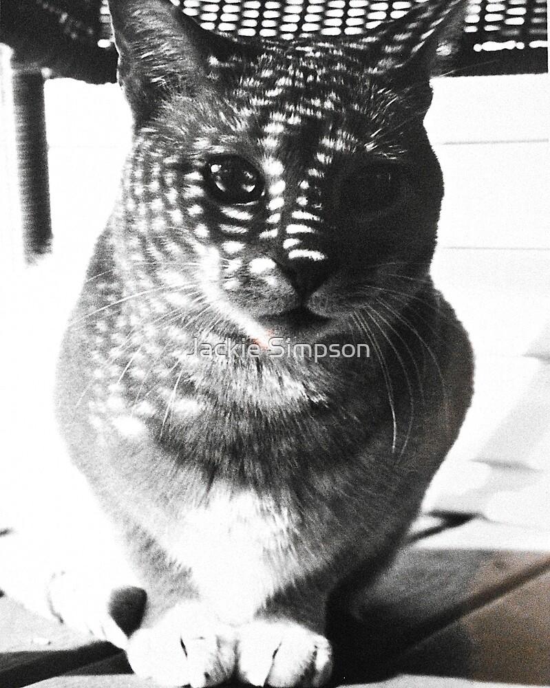 Cast Shadow Cat by Jacqueline Simpson
