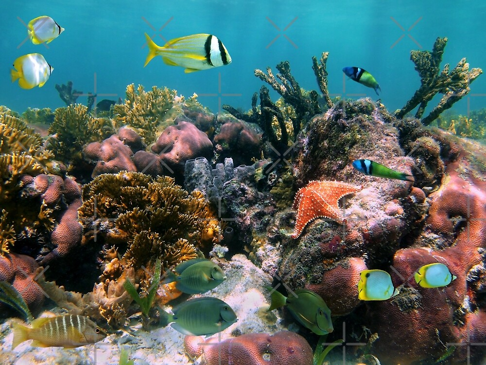 Tropical fish in coral reef by Dam - www.seaphotoart.com