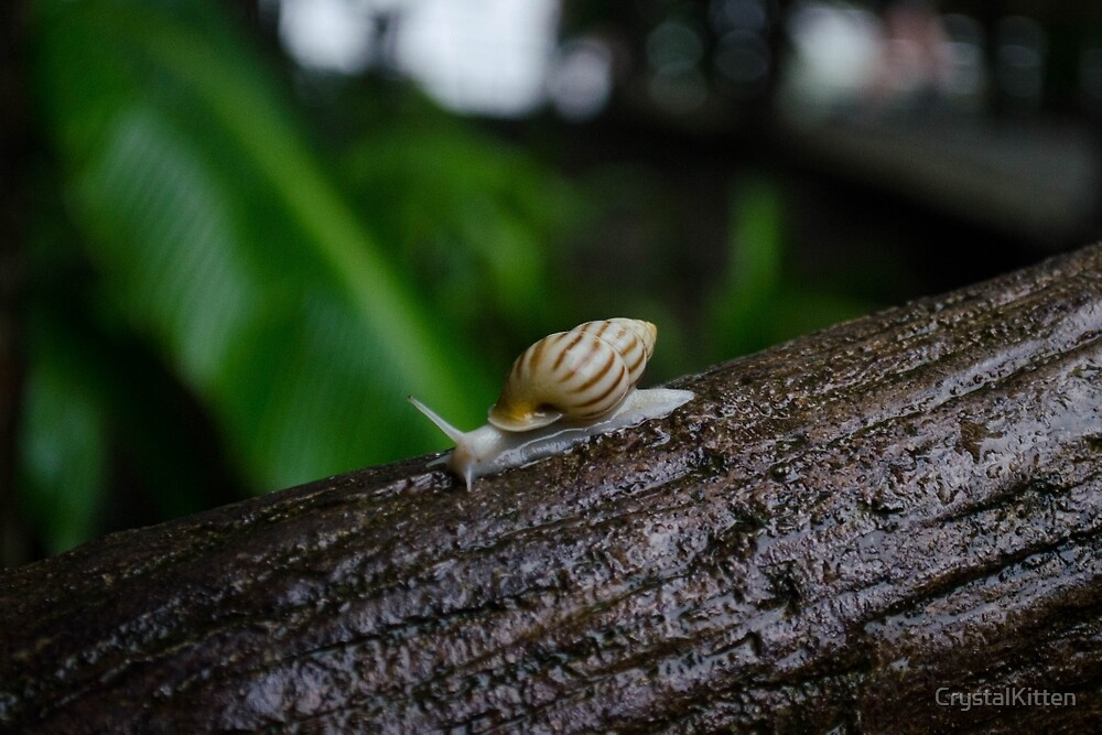 Costa Rican Snail by CrystalKitten