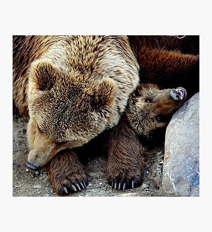 Bearly asleep Photographic Print