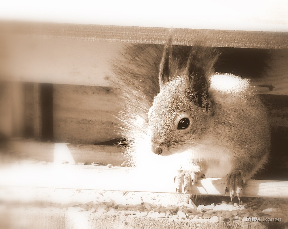 Sepia Squirrel by Ritva Ikonen