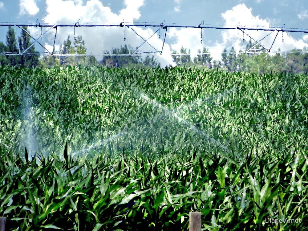Green, Corn Fed Country, Caldwell, Idaho by Diane Arndt