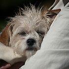 Dog Tired by Jodi Turner