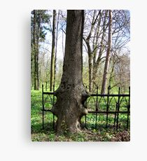 strong nature Canvas Print