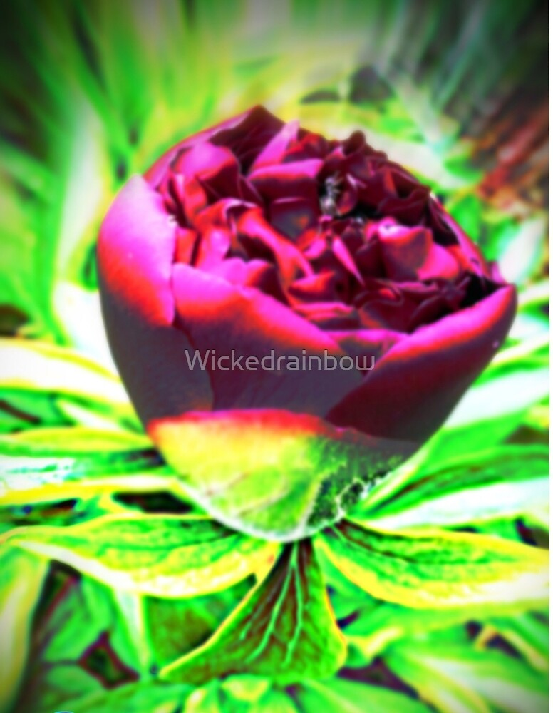 Bold Beauty of the Rose by Wickedrainbow