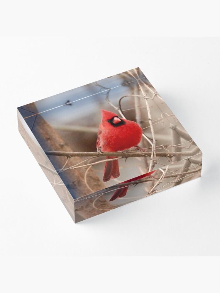 Alternate view of Red Cardinal Acrylic Block