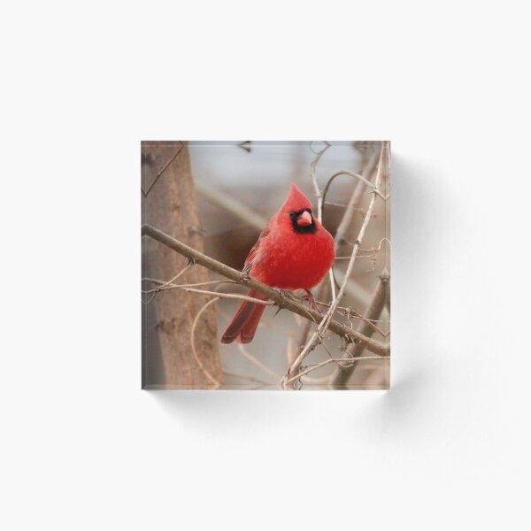 Red Cardinal Acrylic Block