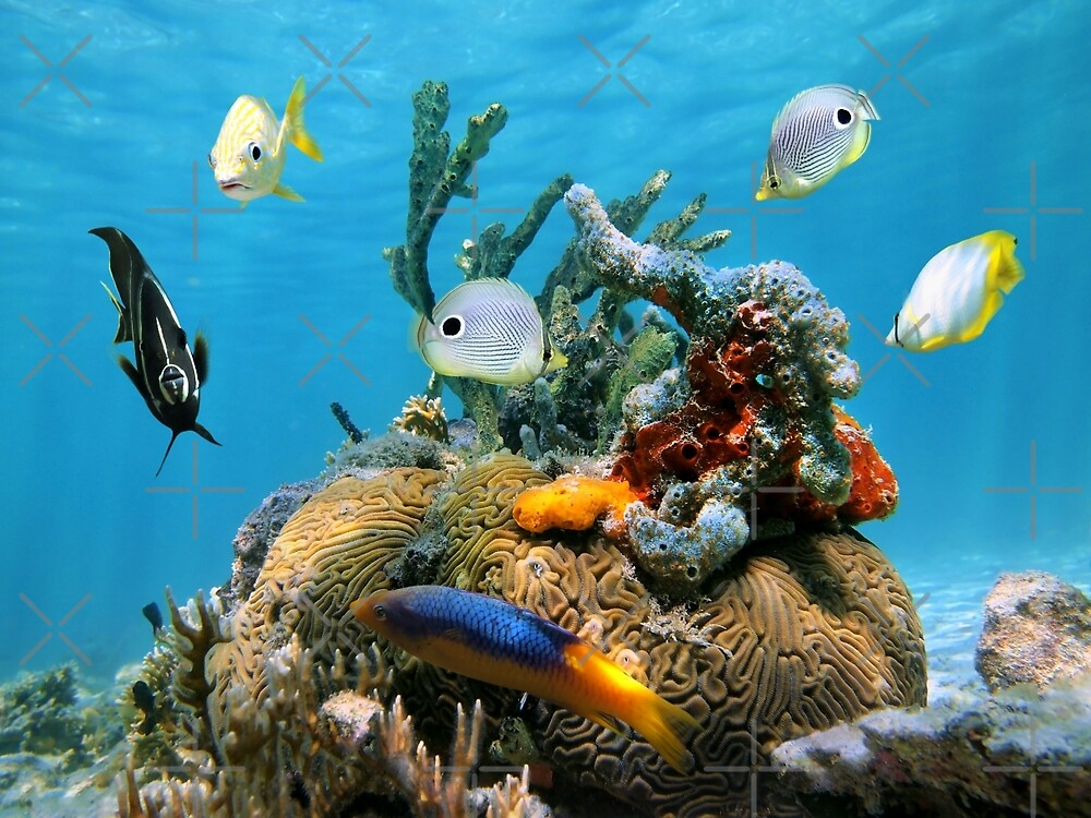 Brain coral with colorful sea sponges and fish by Dam - www.seaphotoart.com
