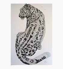 The Snow Leopard Photographic Print