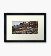 Otter family Framed Print