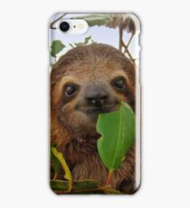 Baby Brown throated Three toed sloth iPhone Case/Skin
