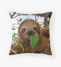 Baby Brown throated Three toed sloth Throw Pillow
