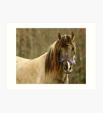 Horse looking at you. Art Print
