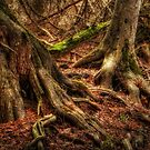 Roots by Jigsawman