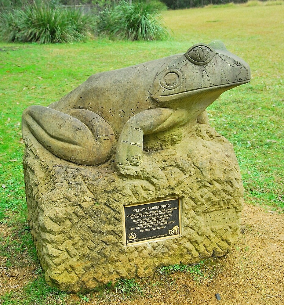 Fleay's Frog by Penny Smith