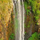 Queen Mary Falls by Penny Smith