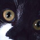 Nelson's macro eyes by TeAnne