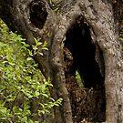 Fairy Tale Tree by John  Sperry