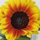 Sunshine by v-something